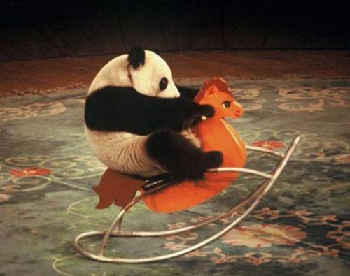 humor,cute,animal,aww,love,nature-bb4f824a7a4850e068be0363c7438115_h