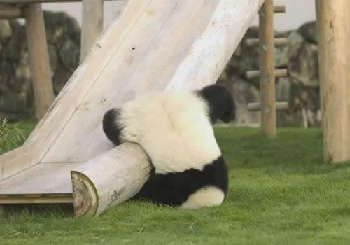 pandafalls