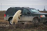 polar-bear-tourists_29050