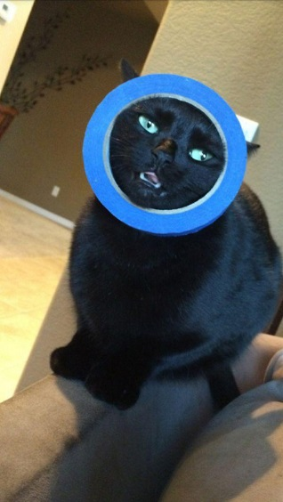 these-cats-have-made-poor-choices-19-photos-13