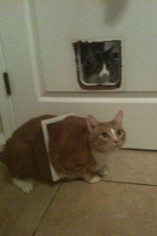 these-cats-have-made-poor-choices-19-photos-19