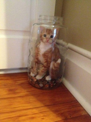 these-cats-have-made-poor-choices-19-photos-4