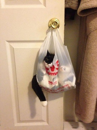 these-cats-have-made-poor-choices-19-photos-5
