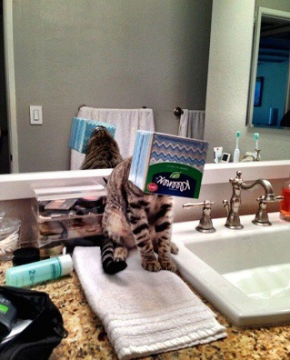 these-cats-have-made-poor-choices-19-photos-8