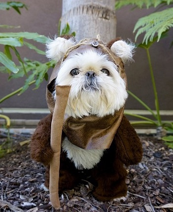 funny-dog-Ewok-costume-Star-Wars