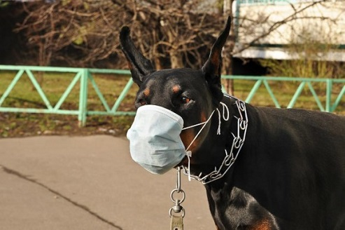 funny-dog-mask-19-580x385